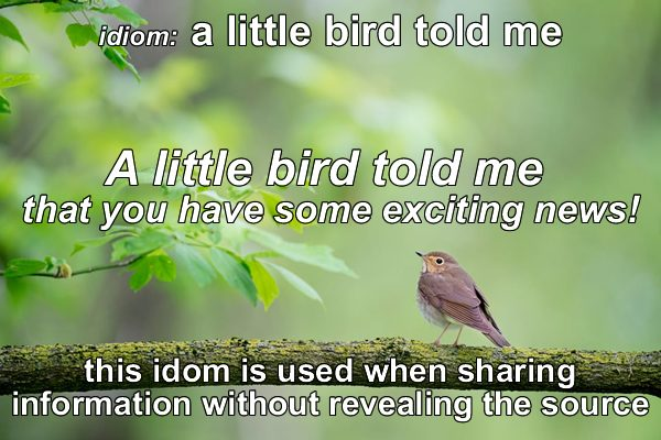 Idiom - Little bird