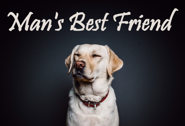 Man's best friend with benefits tumblr wallpapers