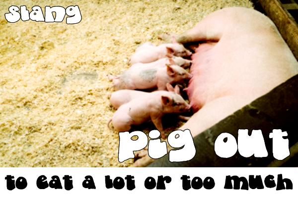 Slang - Pig out