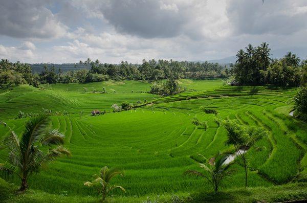 I visited Bali